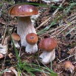 Как собирать грибы и ягоды в лесу