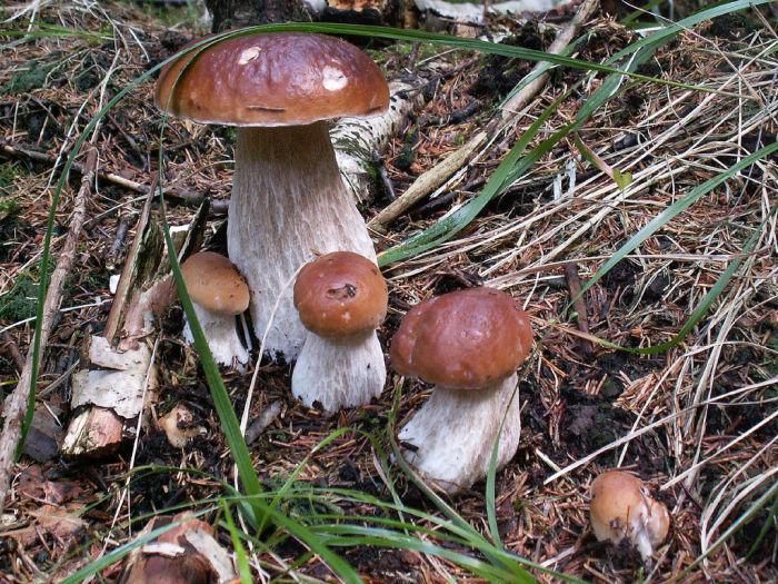 грибы и ягоды